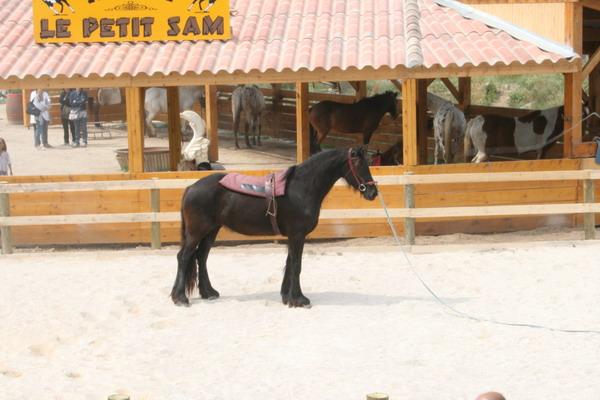 cours de dressage avec un cheval frison au ranch le petit sam a serignan plage