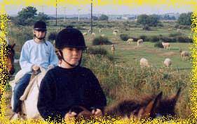 Promenades a cheval a coté d'un berger et ses moutons au bord de l'etang