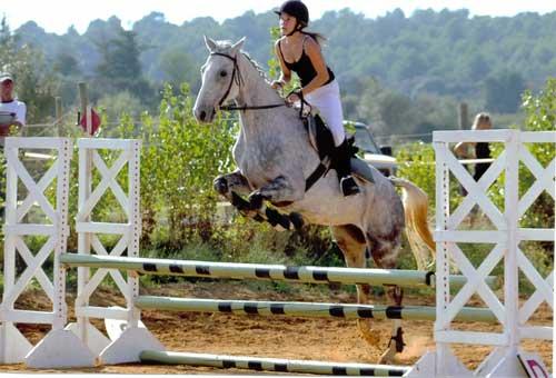 Concours d'equitation avec chloe sur un anglo arabe nomme indien