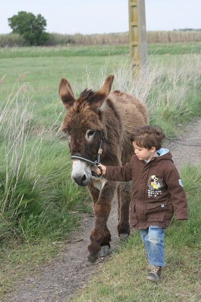 promenades en famille avec un ane et les enfants proche du ranch le petit sam