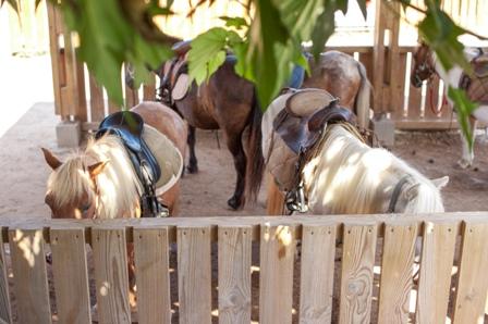 balade poney cours